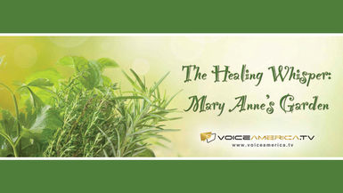 The Healing Whisper: Mary Anne's Garden