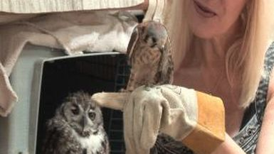 Ep - 65 Wild at Heart Owls